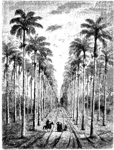 Palmas reales, 1860