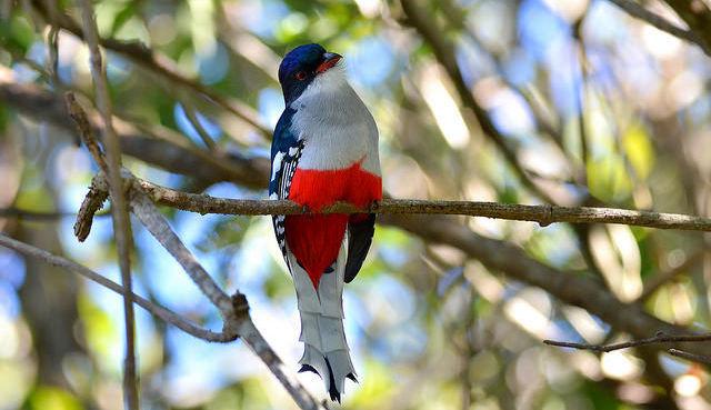 Anthropocène et petits oiseaux : la menace