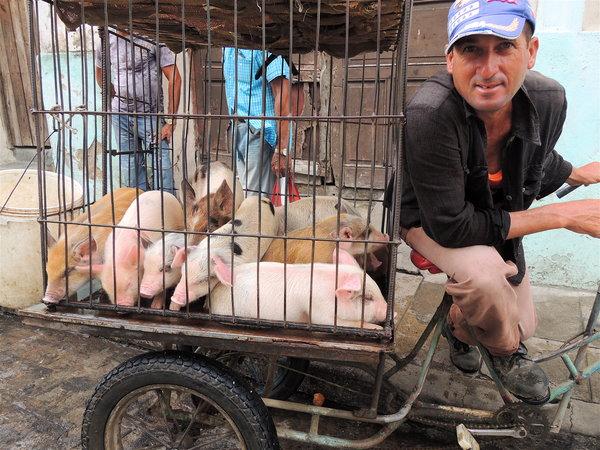 Camaguey se vende cochinitos 2012