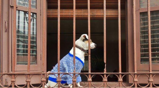 Cuba : enfin une loi de protection animale